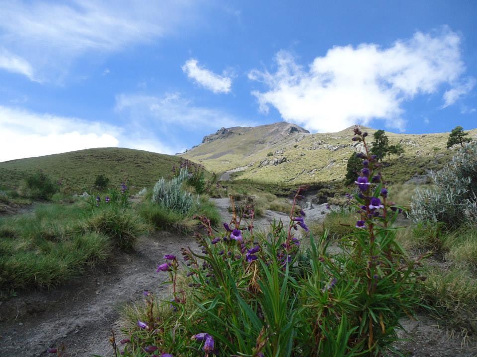 Flores y perfume en la montaña